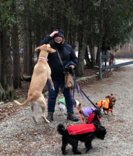 Julie Frisch, owner and manager of JMF Pets, LLC taking several dogs on a group dog hiking trip