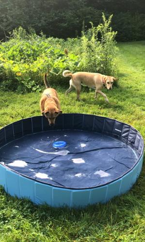 Dog pools for fun in. the sun at JMF Pets' doing daycare.
