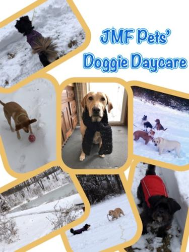 No matter what season, JMF Pets' offers the best pet care in Westborough, Massachusetts. Here is a collage of happy clients highlighting the fun times in winter during outdoor playtime